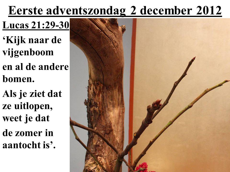 Eerste adventszondag 2 december 2012 Lucas 21:29-30 'Kijk naar de vijgenboom en al de andere bomen.