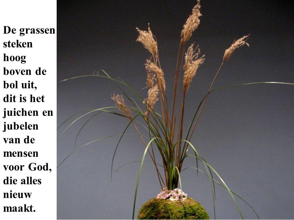 De grassen steken hoog boven de bol uit, dit is het juichen en jubelen van de mensen voor God, die alles nieuw maakt.