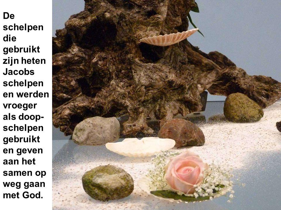 De schelpen die gebruikt zijn heten Jacobs schelpen en werden vroeger als doop- schelpen gebruikt en geven aan het samen op weg gaan met God.
