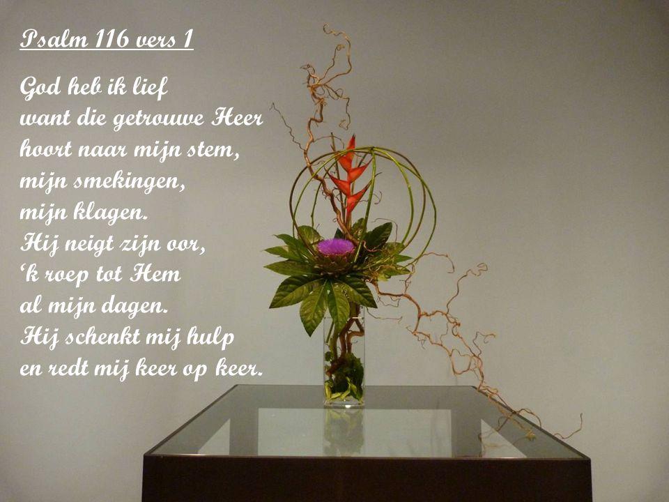 Psalm 116 vers 1 God heb ik lief want die getrouwe Heer hoort naar mijn stem, mijn smekingen, mijn klagen.