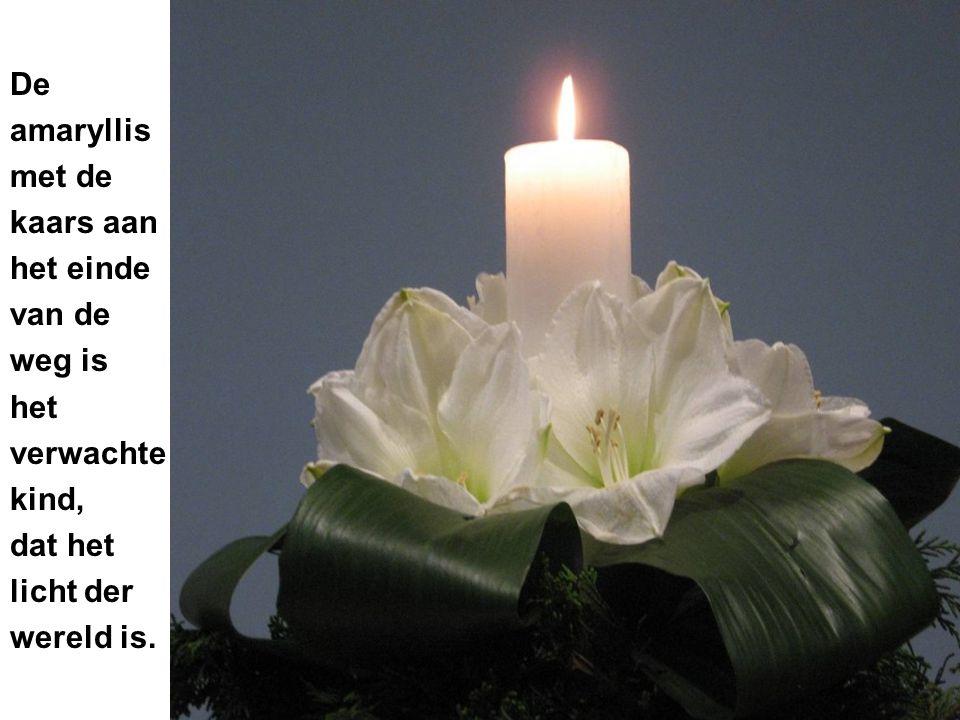 De amaryllis met de kaars aan het einde van de weg is het verwachte kind, dat het licht der wereld is.