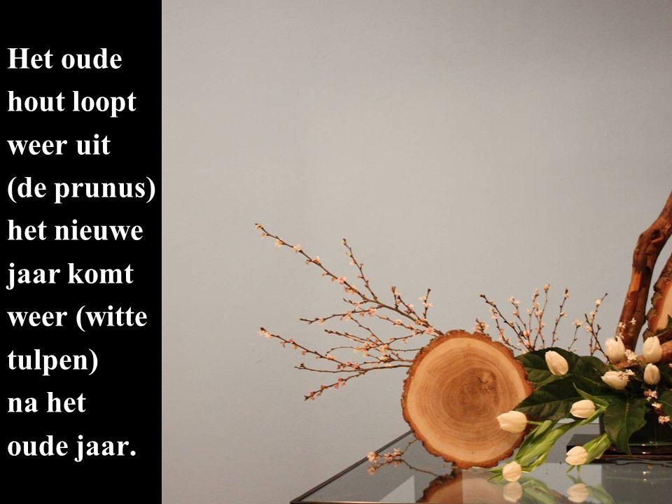 Het oude hout loopt weer uit (de prunus) het nieuwe jaar komt weer (witte tulpen) na het oude jaar.