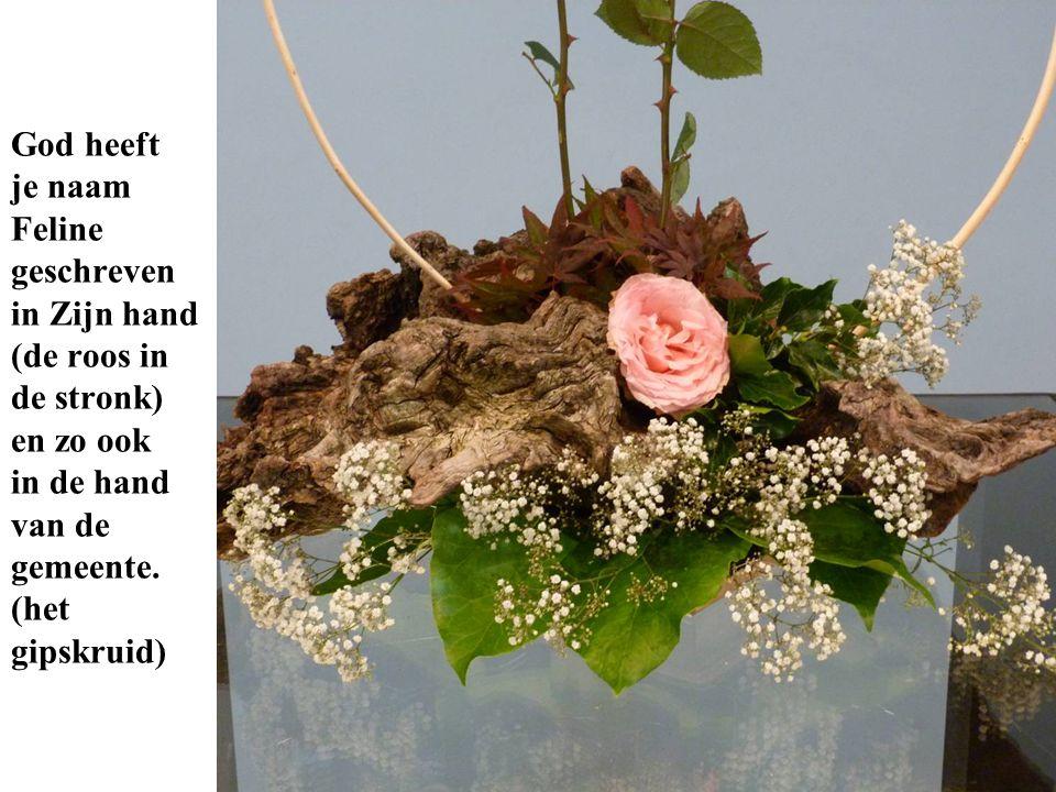 God heeft je naam Feline geschreven in Zijn hand (de roos in de stronk) en zo ook in de hand van de gemeente.