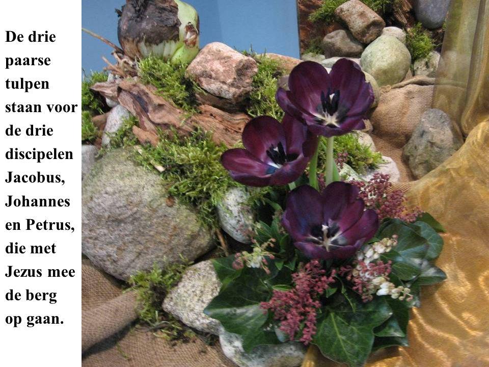 De drie paarse tulpen staan voor de drie discipelen Jacobus, Johannes en Petrus, die met Jezus mee de berg op gaan.