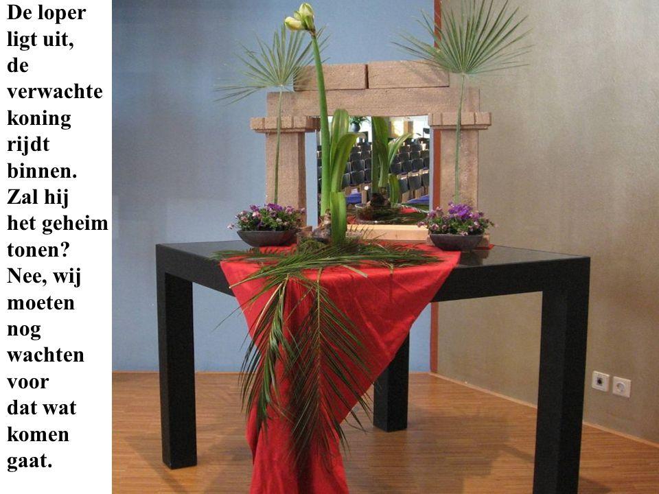 De amaryllis laat ook nog niet zijn volledige bloem zien, alleen maar zijn knoppen.