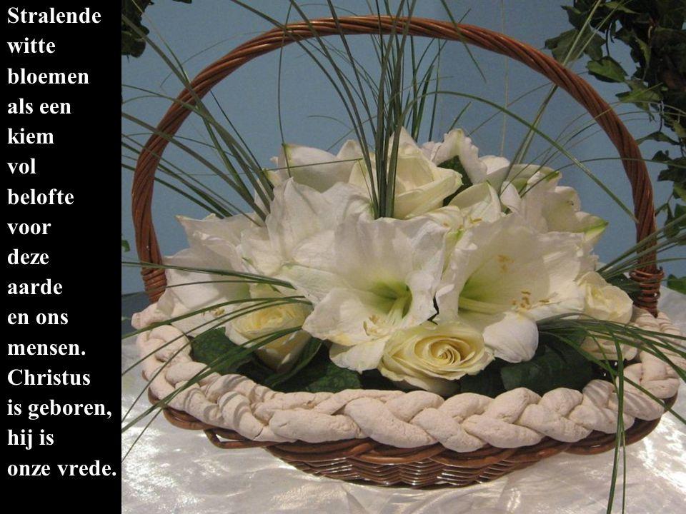 Stralende witte bloemen als een kiem vol belofte voor deze aarde en ons mensen.