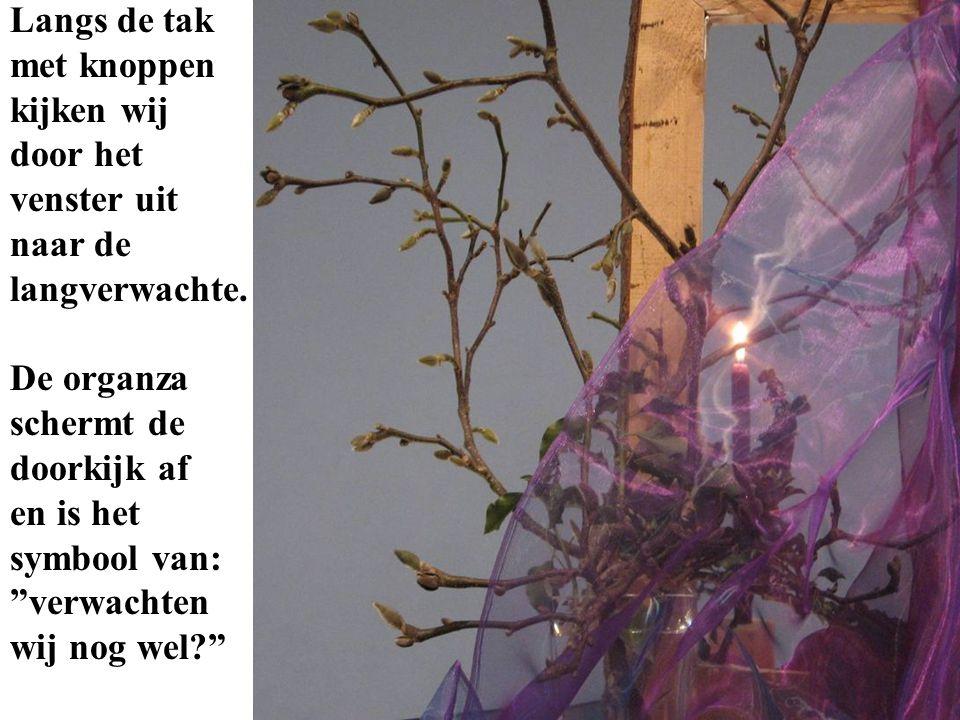 Achter het raam zien wij de advents- kaars en de hedera- ranken, die symboliseren Gods trouw aan Zijn belofte.