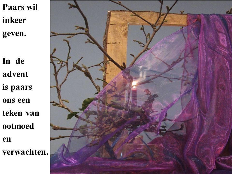 Paars wil inkeer geven. In de advent is paars ons een teken van ootmoed en verwachten.