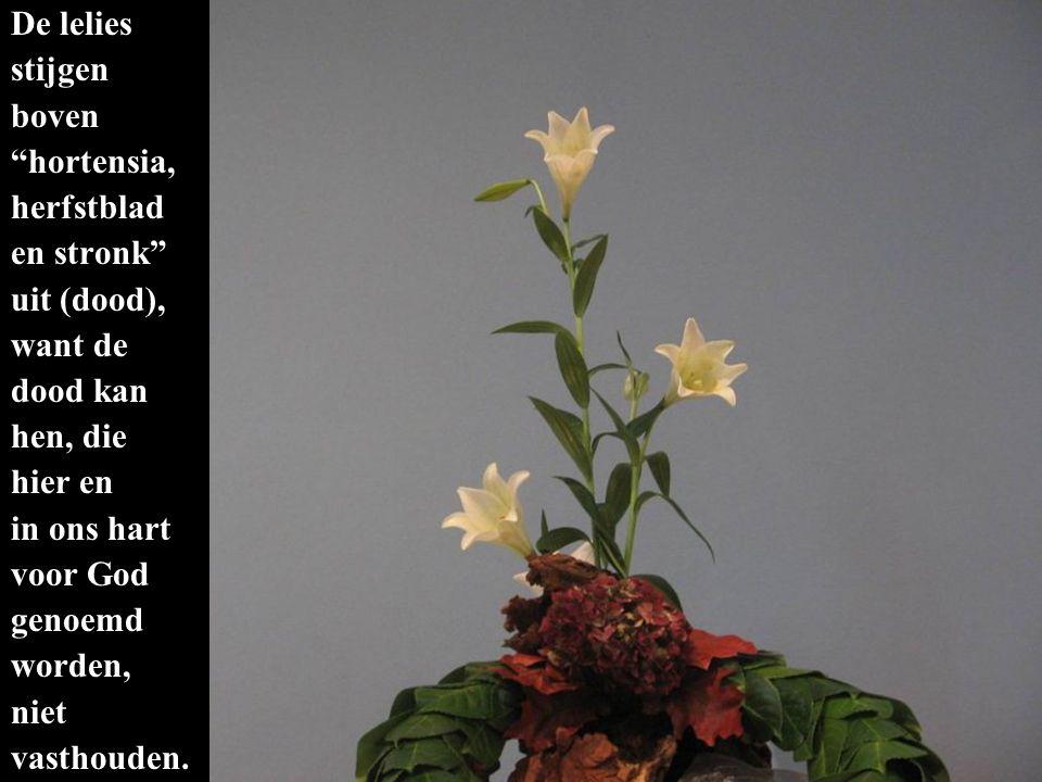 De lelies stijgen boven hortensia, herfstblad en stronk uit (dood), want de dood kan hen, die hier en in ons hart voor God genoemd worden, niet vasthouden.