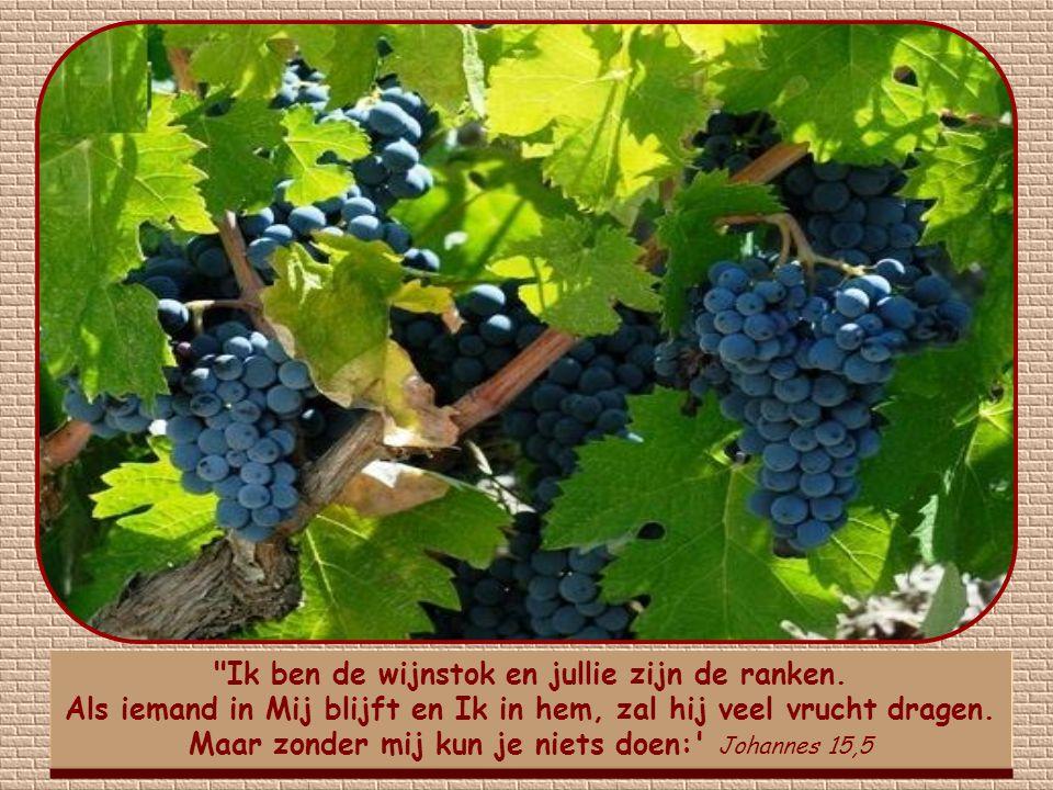 Veel vrucht houdt niet alleen geestelijk en materieel welzijn in van anderen, maar ook van jezelf.