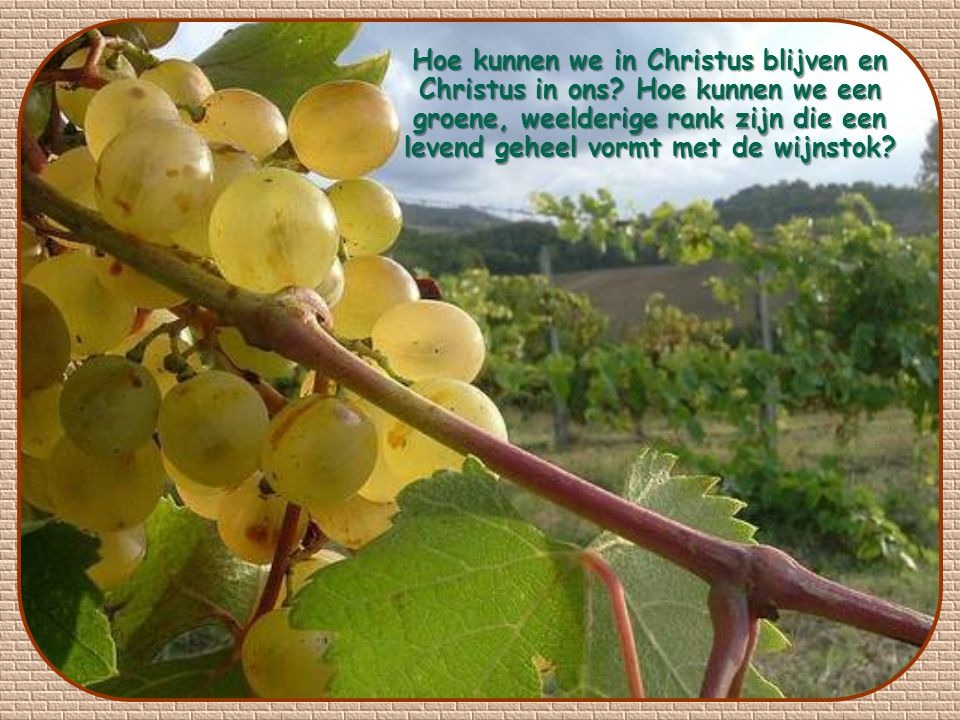 Hoe kunnen we in Christus blijven en Christus in ons.