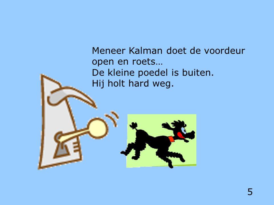 Meneer Kalman doet de voordeur open en roets… De kleine poedel is buiten. Hij holt hard weg. 5