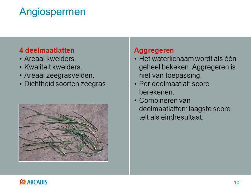 10 Angiospermen 4 deelmaatlatten Areaal kwelders. Kwaliteit kwelders. Areaal zeegrasvelden. Dichtheid soorten zeegras. Aggregeren Het waterlichaam wor