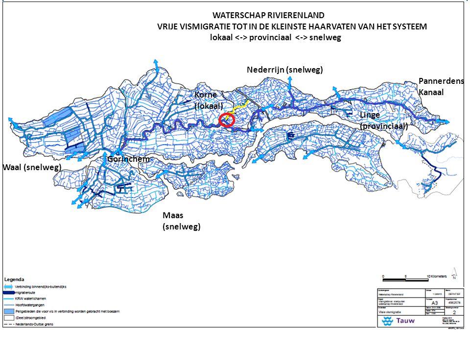 Nederrijn (snelweg) Waal (snelweg) WATERSCHAP RIVIERENLAND VRIJE VISMIGRATIE TOT IN DE KLEINSTE HAARVATEN VAN HET SYSTEEM lokaal provinciaal snelweg Linge (provinciaal) Pannerdens Kanaal Gorinchem Korne (lokaal) Maas (snelweg)