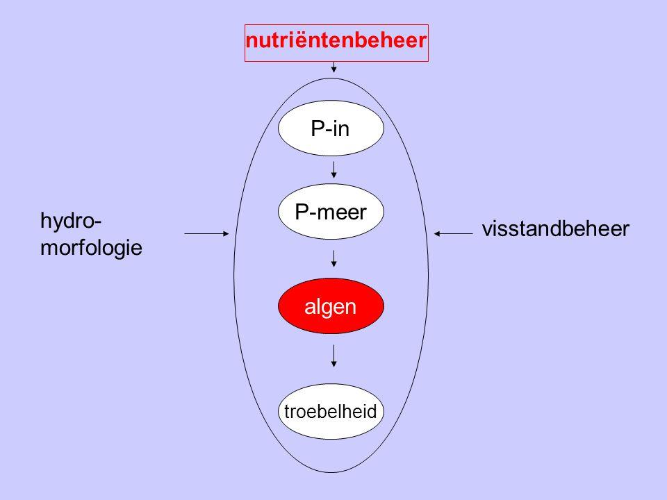 P-in P-meer algen troebelheid nutriëntenbeheer hydro- morfologie visstandbeheer