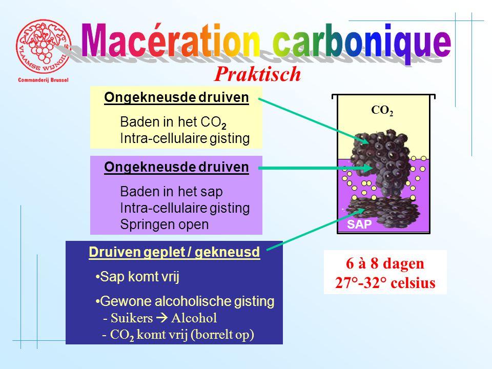 CO 2 SAP Druiven geplet / gekneusd Sap komt vrij Gewone alcoholische gisting - Suikers  Alcohol - CO 2 komt vrij (borrelt op) Ongekneusde druiven Baden in het sap Intra-cellulaire gisting Springen open Ongekneusde druiven Baden in het CO 2 Intra-cellulaire gisting Praktisch 6 à 8 dagen 27°-32° celsius