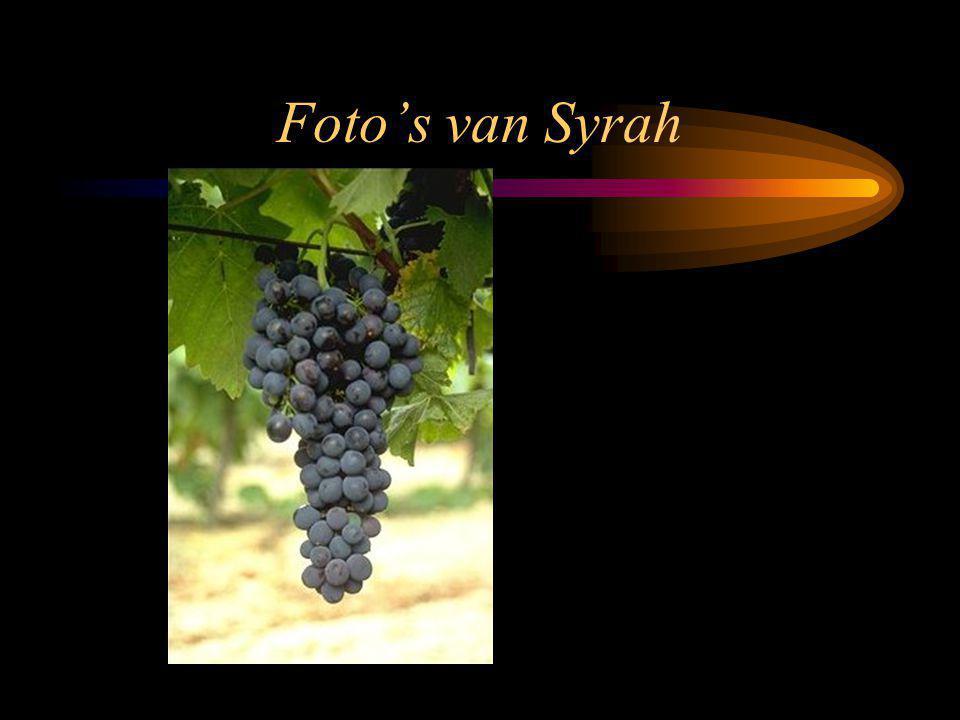 Foto's van Syrah