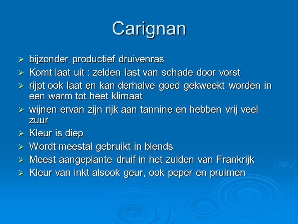 Carignan  bijzonder productief druivenras  Komt laat uit : zelden last van schade door vorst  rijpt ook laat en kan derhalve goed gekweekt worden i
