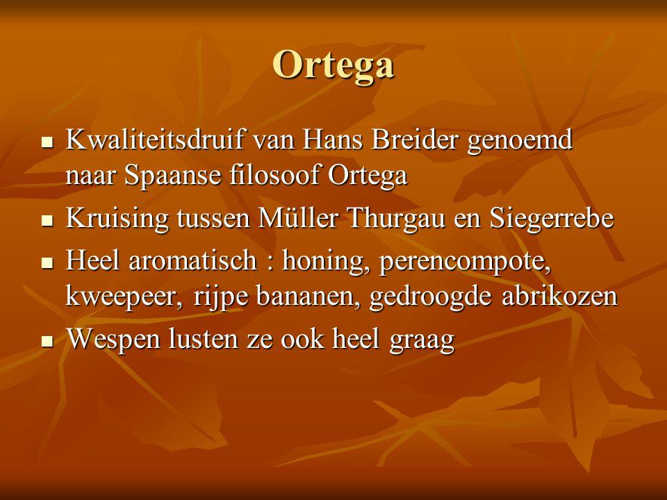 Ortega Kwaliteitsdruif van Hans Breider genoemd naar Spaanse filosoof Ortega Kwaliteitsdruif van Hans Breider genoemd naar Spaanse filosoof Ortega Kru