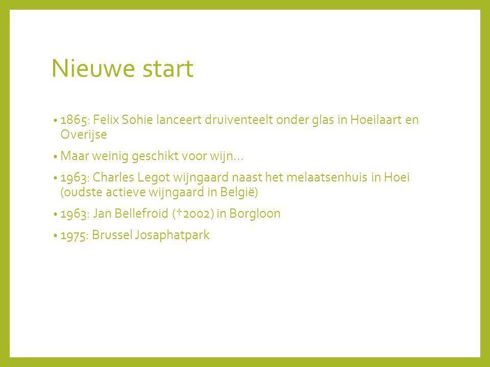 Nieuwe start 1865: Felix Sohie lanceert druiventeelt onder glas in Hoeilaart en Overijse Maar weinig geschikt voor wijn...