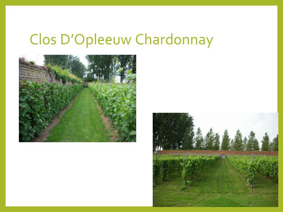 Clos D'Opleeuw Chardonnay