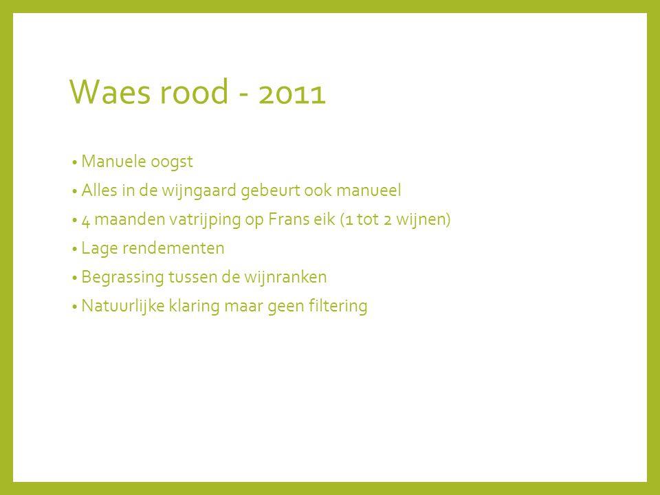 Waes rood - 2011 Manuele oogst Alles in de wijngaard gebeurt ook manueel 4 maanden vatrijping op Frans eik (1 tot 2 wijnen) Lage rendementen Begrassing tussen de wijnranken Natuurlijke klaring maar geen filtering