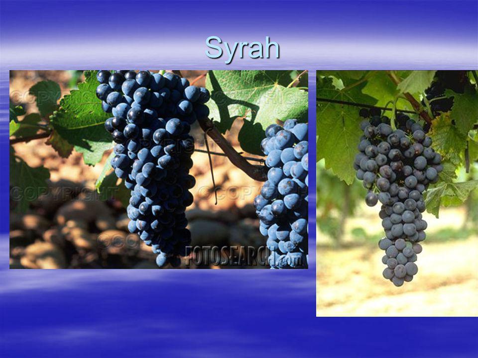 Syrah Syrah