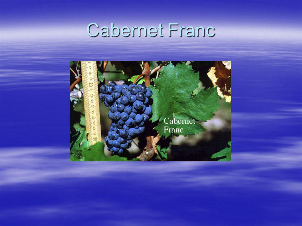Carmenère  Oorsprong in Bordeaux, komt er nu nog in mindere mate voor  Werd ook wel Chileense Merlot genoemd  Geeft molligheid aan de structuur  Dikwijls ook vlezigheid