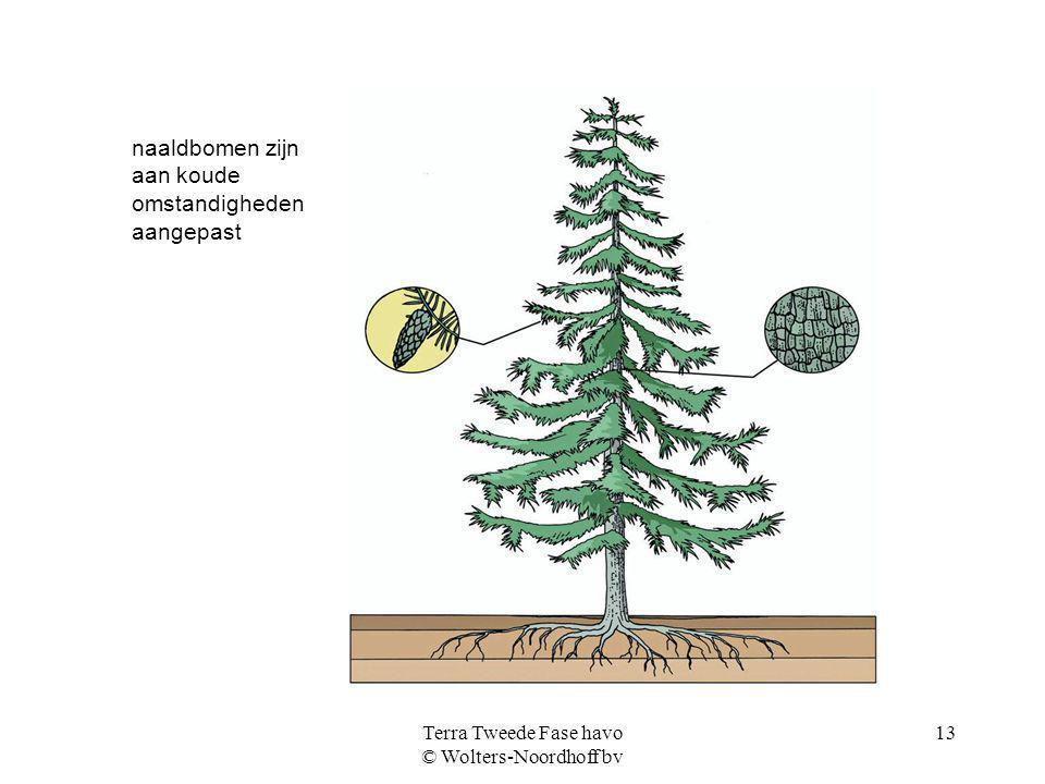 Terra Tweede Fase havo © Wolters-Noordhoff bv 13 naaldbomen zijn aan koude omstandigheden aangepast