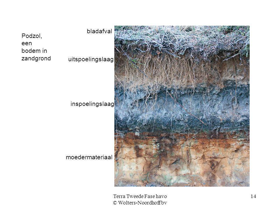 Terra Tweede Fase havo © Wolters-Noordhoff bv 14 Podzol, een bodem in zandgrond bladafval uitspoelingslaag inspoelingslaag moedermateriaal