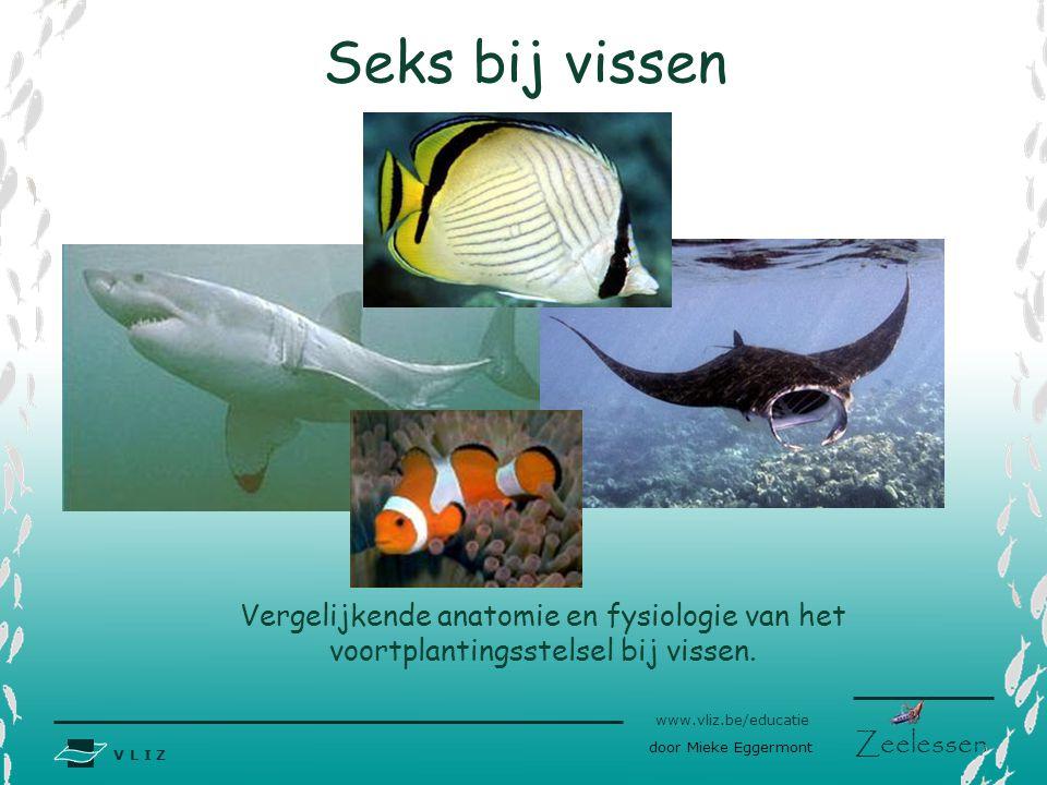 V L I Z www.vliz.be/educatie Zeelessen Seks bij vissen Vergelijkende anatomie en fysiologie van het voortplantingsstelsel bij vissen. ? door Mieke Egg
