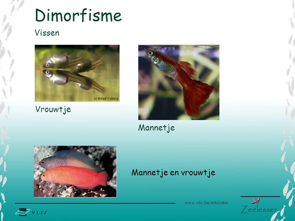 V L I Z www.vliz.be/educatie Zeelessen Vissen Mannetje Vrouwtje Dimorfisme Mannetje en vrouwtje