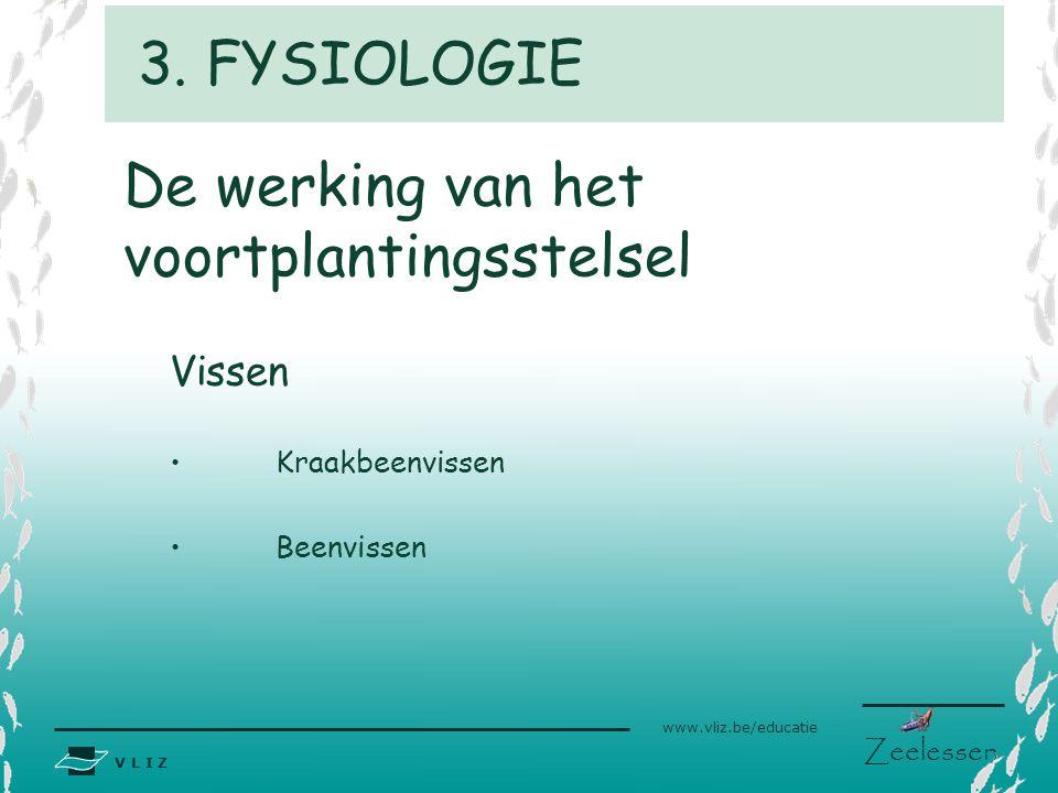 V L I Z www.vliz.be/educatie Zeelessen De werking van het voortplantingsstelsel Vissen Kraakbeenvissen Beenvissen 3. FYSIOLOGIE