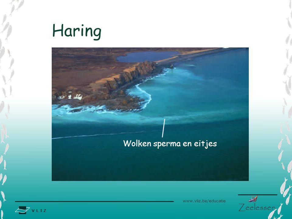 V L I Z www.vliz.be/educatie Zeelessen Haring Wolken sperma en eitjes
