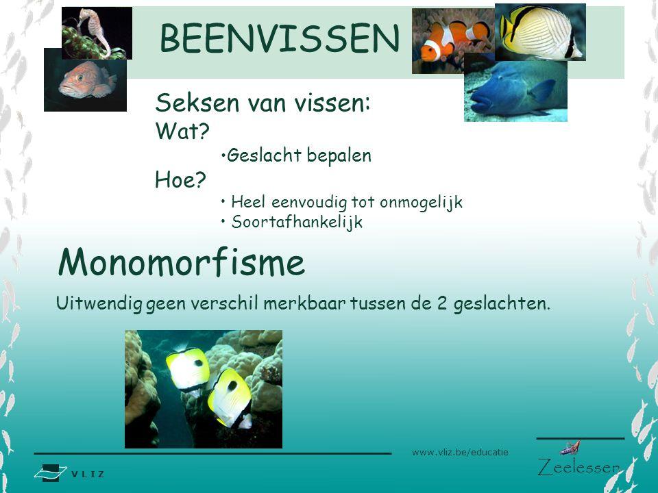 V L I Z www.vliz.be/educatie Zeelessen BEENVISSEN Monomorfisme Uitwendig geen verschil merkbaar tussen de 2 geslachten. Seksen van vissen: Wat? Geslac