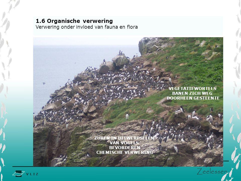 V L I Z www.vliz.be Zeelessen 1.6 Organische verwering Verwering onder invloed van fauna en flora ZUREN IN UITWERPSELEN VAN VOGELS BEVORDEREN CHEMISCH