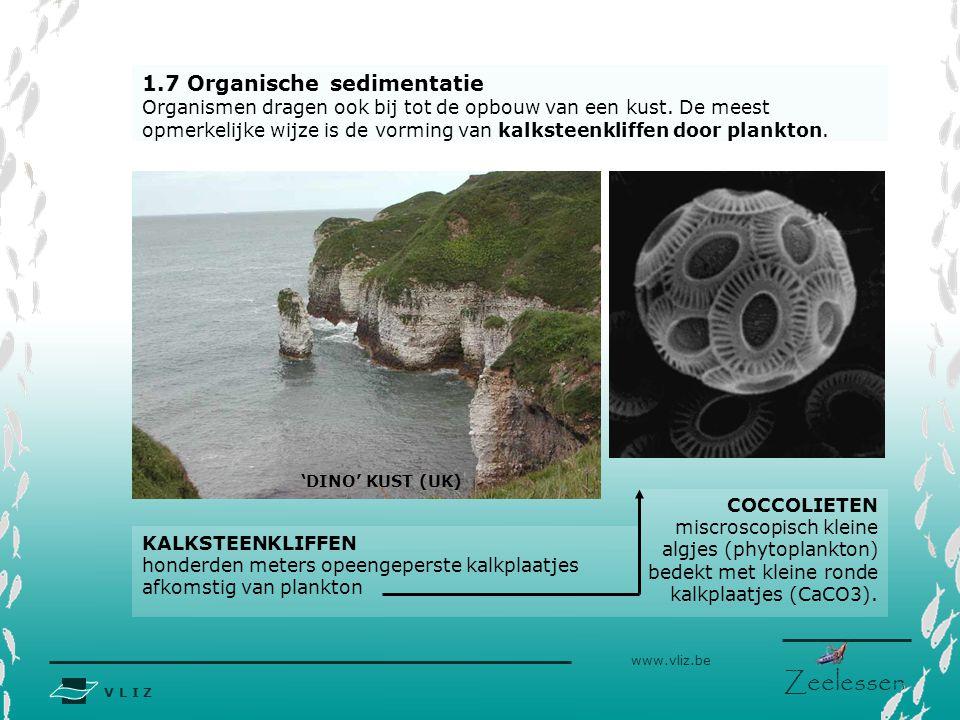 V L I Z www.vliz.be Zeelessen 1.7 Organische sedimentatie Organismen dragen ook bij tot de opbouw van een kust. De meest opmerkelijke wijze is de vorm