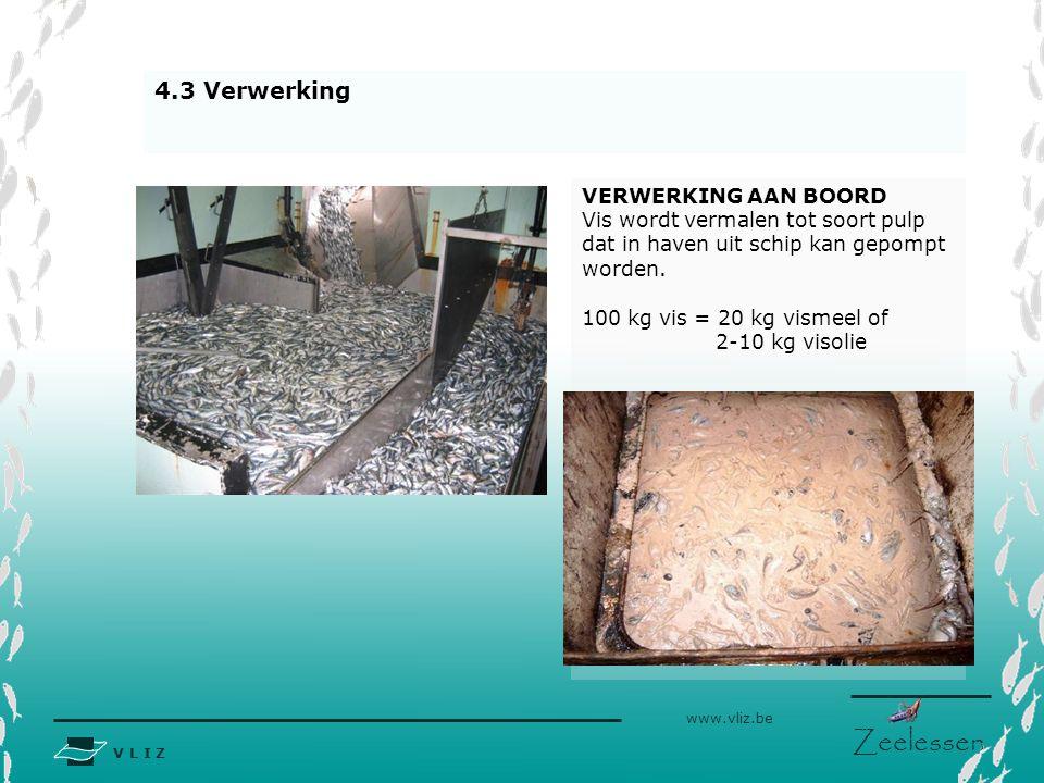 V L I Z www.vliz.be Zeelessen VERWERKING AAN BOORD Vis wordt vermalen tot soort pulp dat in haven uit schip kan gepompt worden. 100 kg vis = 20 kg vis
