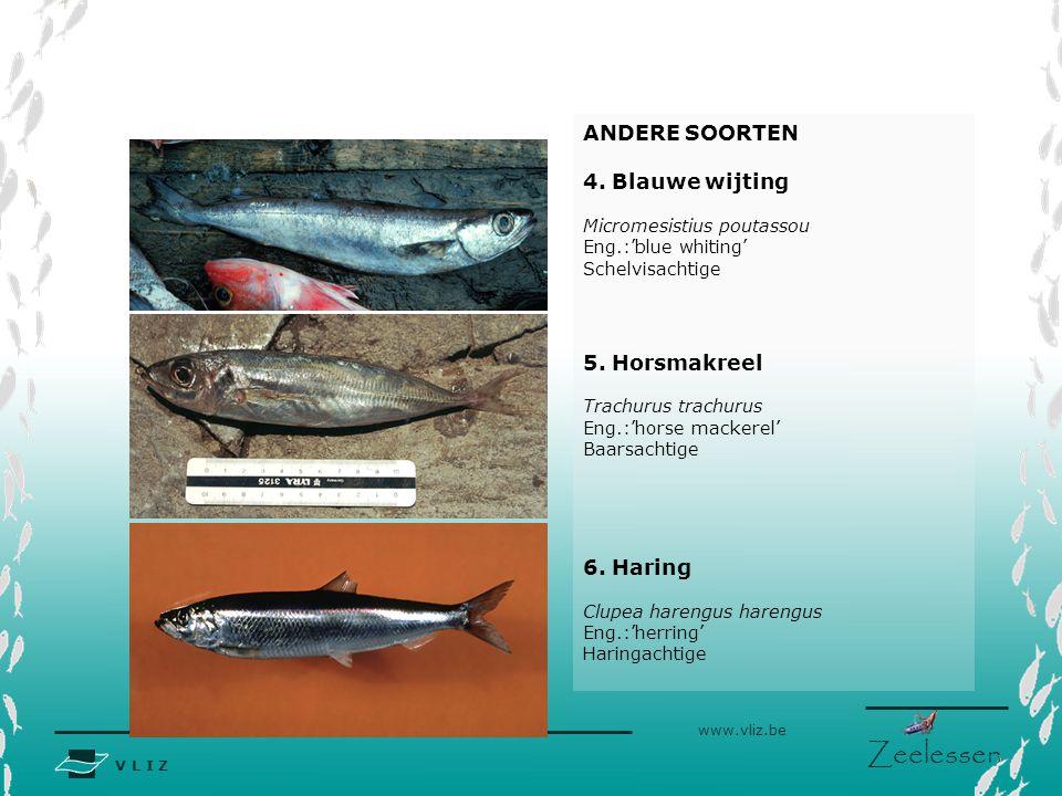 V L I Z www.vliz.be Zeelessen Tabel: Schatting van industriële visvangst in Noordzee, Skagerrak en Kattegat voor 1999.