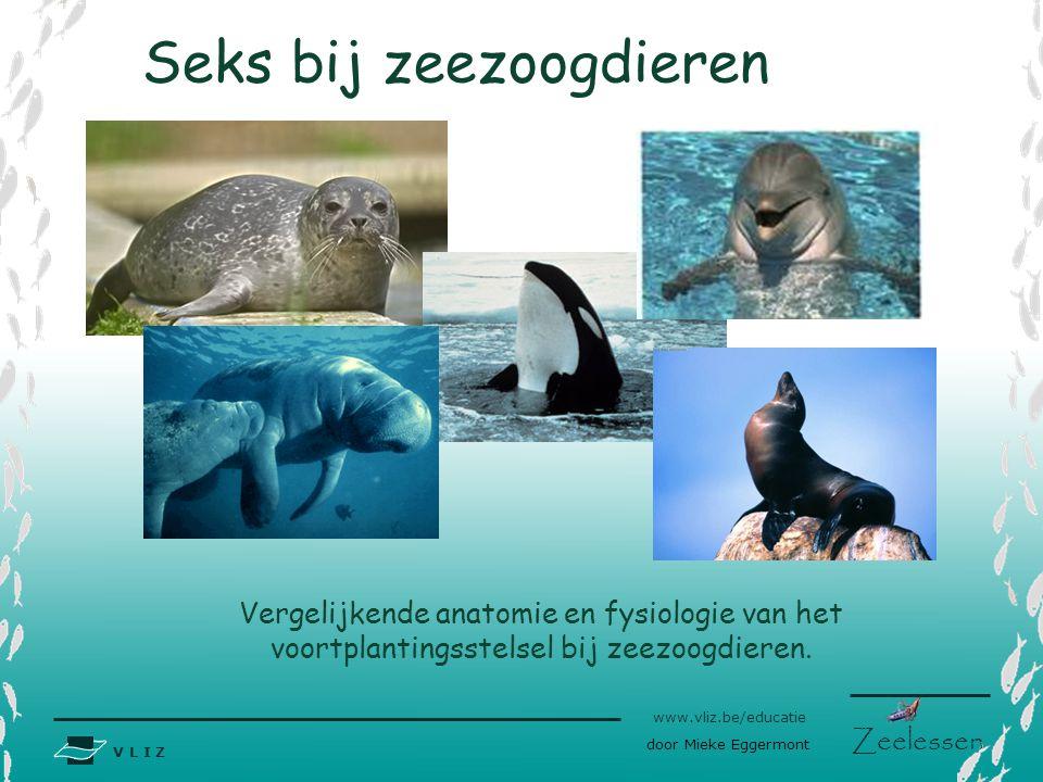V L I Z www.vliz.be/educatie Zeelessen Seks bij zeezoogdieren Vergelijkende anatomie en fysiologie van het voortplantingsstelsel bij zeezoogdieren. do