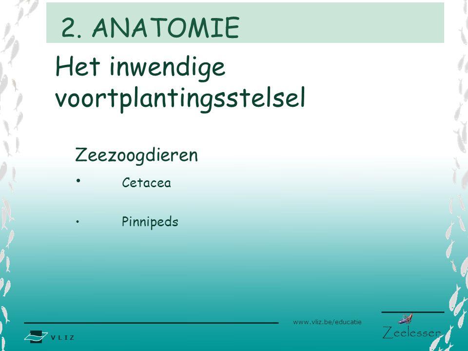 V L I Z www.vliz.be/educatie Zeelessen Het inwendige voortplantingsstelsel Zeezoogdieren Cetacea Pinnipeds 2. ANATOMIE