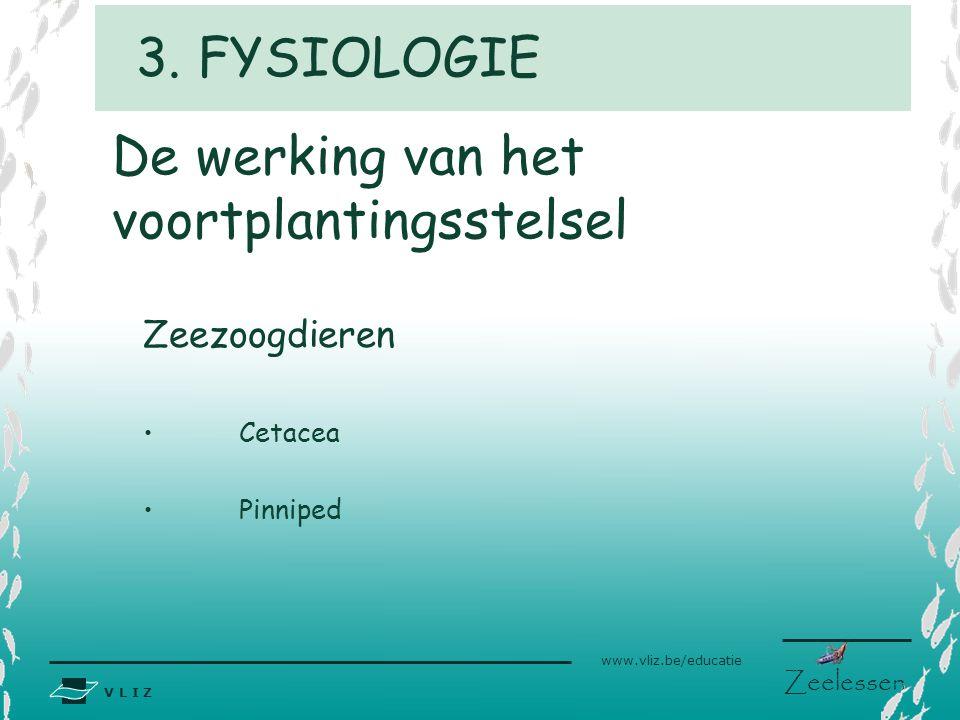 V L I Z www.vliz.be/educatie Zeelessen De werking van het voortplantingsstelsel Zeezoogdieren Cetacea Pinniped 3. FYSIOLOGIE