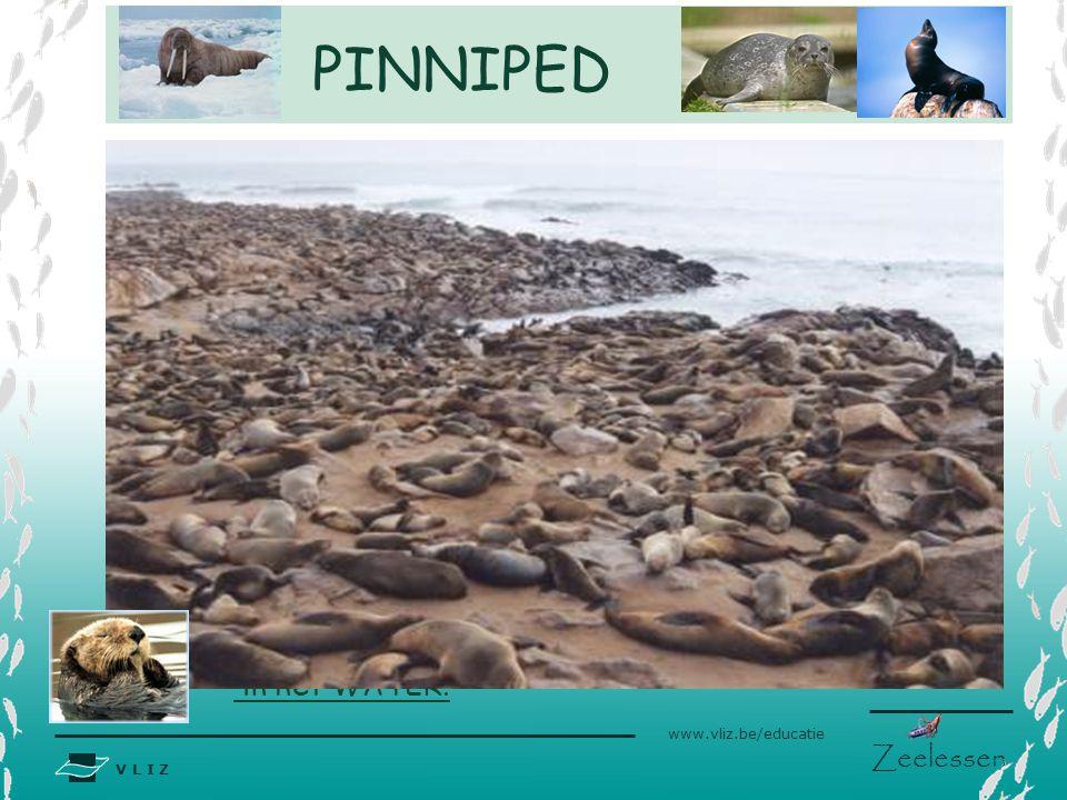 V L I Z www.vliz.be/educatie Zeelessen Interne bevruchting Seizoensgebonden paartijd –sommige soorten komen met duizenden tegelijk aan land Mogelijkhe
