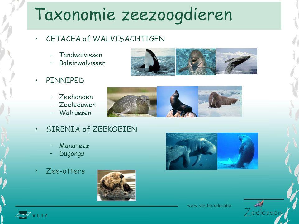 V L I Z www.vliz.be/educatie Zeelessen CETACEA of WALVISACHTIGEN –Tandwalvissen –Baleinwalvissen PINNIPED –Zeehonden –Zeeleeuwen –Walrussen SIRENIA of
