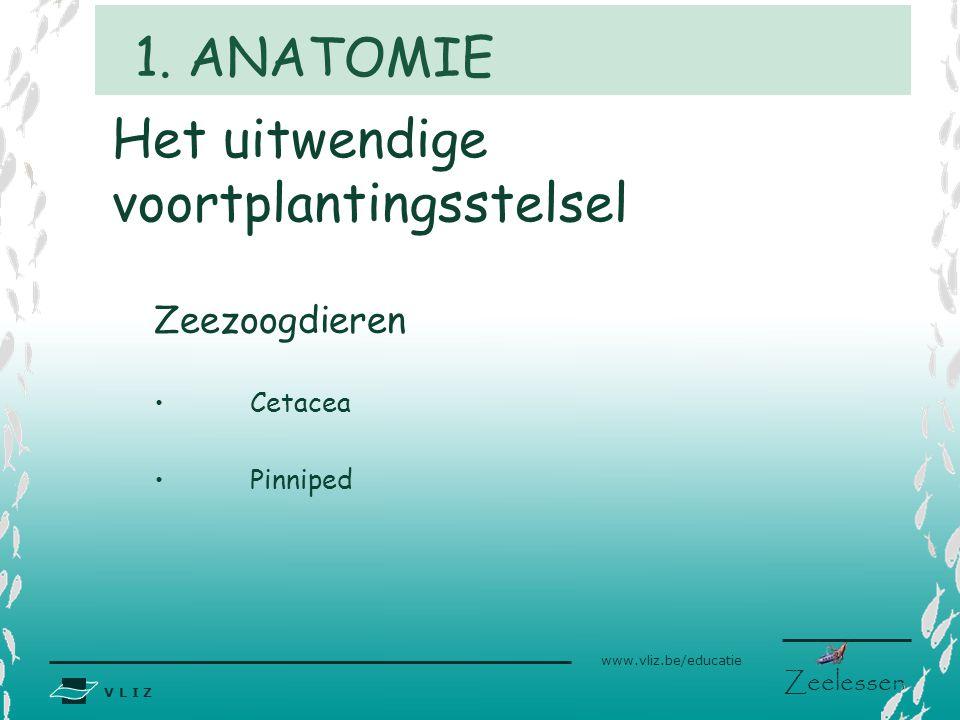V L I Z www.vliz.be/educatie Zeelessen Het uitwendige voortplantingsstelsel Zeezoogdieren Cetacea Pinniped 1. ANATOMIE
