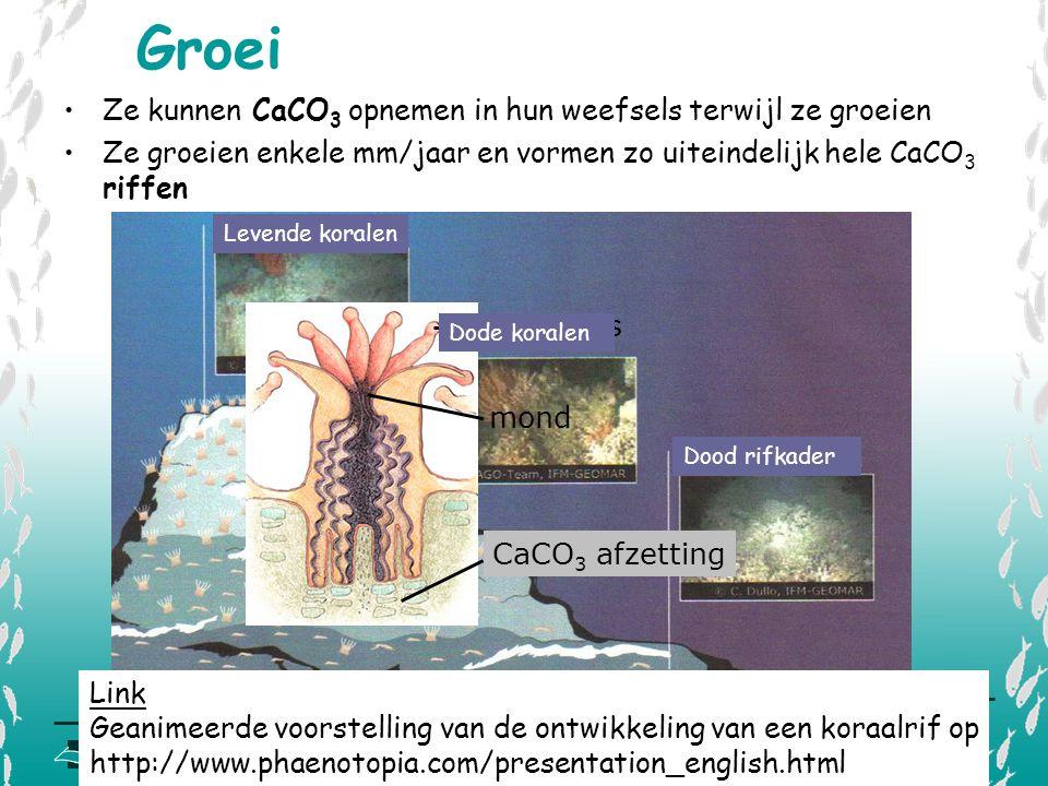 V L I Z www.vliz.be/educatie Zeelessen mond tentakels CaCO 3 afzetting Ze kunnen CaCO 3 opnemen in hun weefsels terwijl ze groeien Ze groeien enkele m