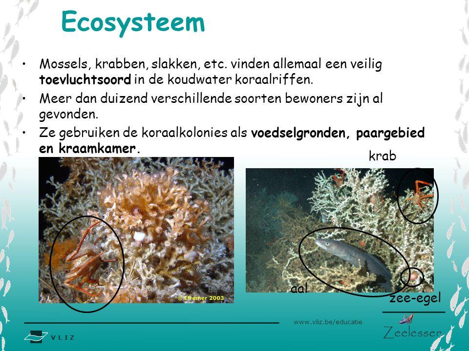 V L I Z www.vliz.be/educatie Zeelessen Mossels, krabben, slakken, etc. vinden allemaal een veilig toevluchtsoord in de koudwater koraalriffen. Meer da