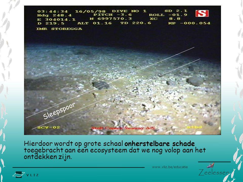 V L I Z www.vliz.be/educatie Zeelessen Bottom trawling Commerciële visserij-methode waarbij zeer zware sleepnetten over de bodem (tot 1500m diep) word