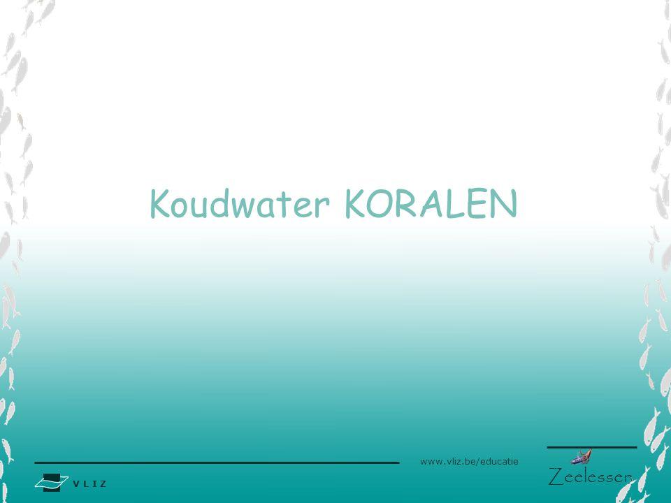 V L I Z www.vliz.be/educatie Zeelessen Koudwater KORALEN