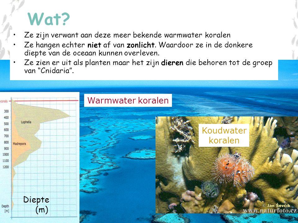 V L I Z www.vliz.be/educatie Zeelessen Wat? Koudwater koralen Ze zijn verwant aan deze meer bekende warmwater koralen Ze hangen echter niet af van zon